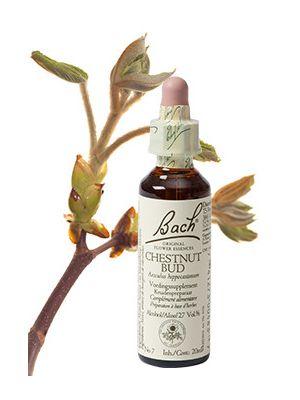 Bach Chestnut Bud / Kastanjeknop 20 ml 07